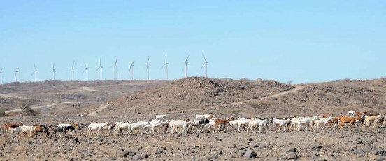 Goats on wind farm 3